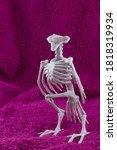 Scary Headless Bird Skeletion...