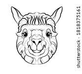 llama  head . line drawing.... | Shutterstock .eps vector #1818375161