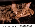 A Painting Of Kitten Sleeping...