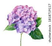 Lilac Hydrangea Flowers ...