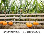 Pumpkins Lying On Hay On The...