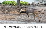Photo Of Blackbuck  Antilope...