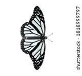 Danaus Plexippus   Monarch...