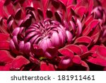 background of beautiful flowers | Shutterstock . vector #181911461