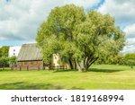 Bicentennial Deciduous Tree In...