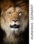 Lion Portrait On Black...