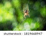 Spider On Spider Web On Blurre...
