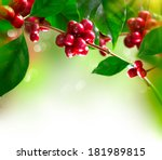 coffee plant. red coffee beans... | Shutterstock . vector #181989815