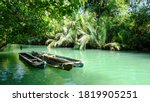 Mangrove Forest View By Boat O...
