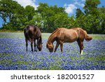 Two Horses Grazing In The...