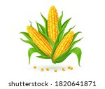 Corncobs With Yellow Corns And...