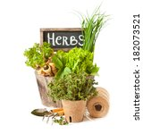 Fresh herbs and gardening tools on a white background. - stock photo