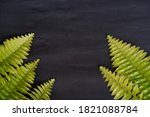 green leaves isolated on black  ... | Shutterstock . vector #1821088784
