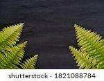 green leaves isolated on black  ... | Shutterstock . vector #1821088784