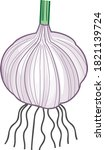 Garlic Bulb With Roots Isolate...
