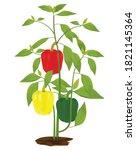 sweet pepper plant on white... | Shutterstock .eps vector #1821145364