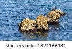 Cormorants On The Rocks In The...