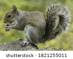 This Is Image Of Squirrel