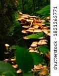 Beautiful Mycelium Of Orange...