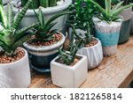 Green Houseplants Cactus...