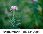 The Pretty Little Purple Flower ...