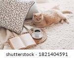 Cute Ginger Cat Is Sleeping In...
