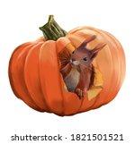 Funny Squirrel And Pumpkin...
