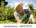 Stock photo senior woman wearing sun hat checking flowers in garden outdoors copy space 182170751