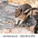 A Chipmunk Plays Among The...