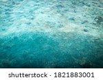 Black Tip Reef Shark Circles A...