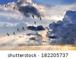 Group Of Canadian Geese Flying...