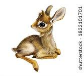 Lying Antilope Dik Dik  Madoqu...