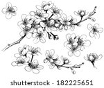 hand drawn cherry blossom | Shutterstock .eps vector #182225651