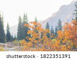Autumn In The Mountains  Color...