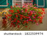 Flowers In A Flower Box At A...
