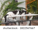 A Lazy Cat Sleeps On A Table In ...