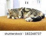 Stock photo a cat sleep on orange sofa 182268737