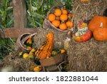 Pumpkin In Baskets  Haystack ...