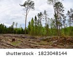 Felled Trees In Forest....