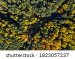 Aerial Photo Of Colorful Forest ...