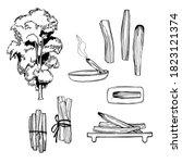 palo santo  bursera graveolens  ...   Shutterstock .eps vector #1823121374