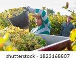 Latin American Farmer Working...
