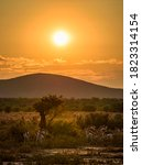 Small photo of Herd of springbok antelopes, also known as Antidorcas marsupialis, photographed at sunset in Namibia.
