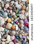 Multicolored Dry Seashells Of...