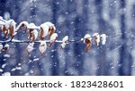 Snow Covered Tree Branch With...