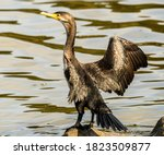 A Cormorant Stands On Rocks...