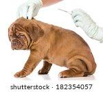 Veterinary Care   Dogue De...