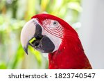Portrait Of A Red Parrot In The ...