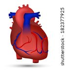heart of human | Shutterstock .eps vector #182377925