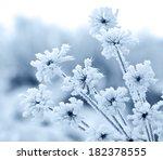 Flower In Winter With Frozen...